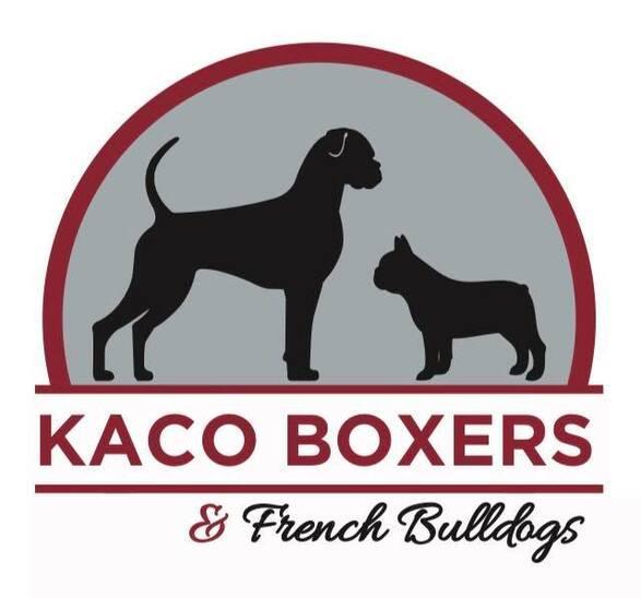 Kaco Boxers Reg'd - Home